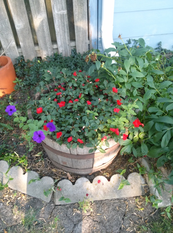 Red Impatiens Barrel